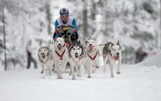Internationales Schlittenhunderennen Todtmoos